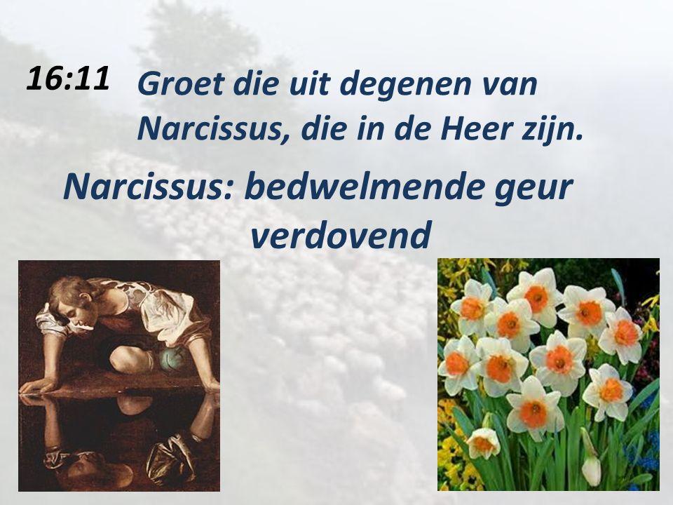 16:11 Groet die uit degenen van Narcissus, die in de Heer zijn.
