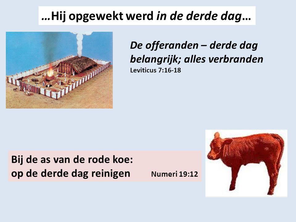 …Hij opgewekt werd in de derde dag… De offeranden – derde dag belangrijk; alles verbranden Leviticus 7:16-18 Bij de as van de rode koe: op de derde dag reinigen Numeri 19:12