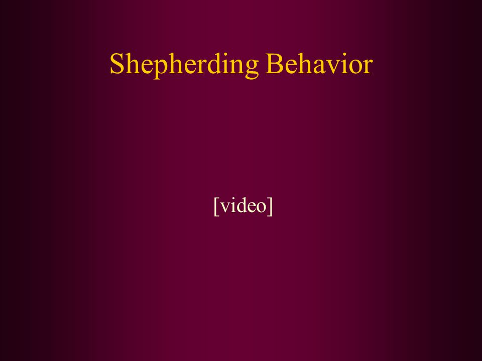 Shepherding Behavior [video]