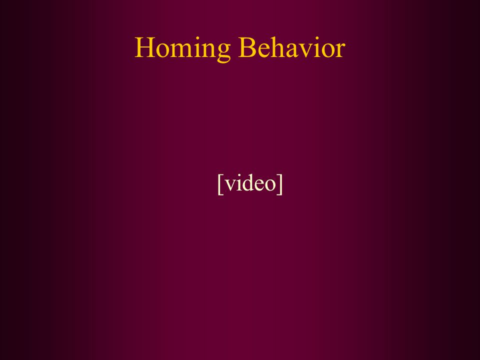 Homing Behavior [video]