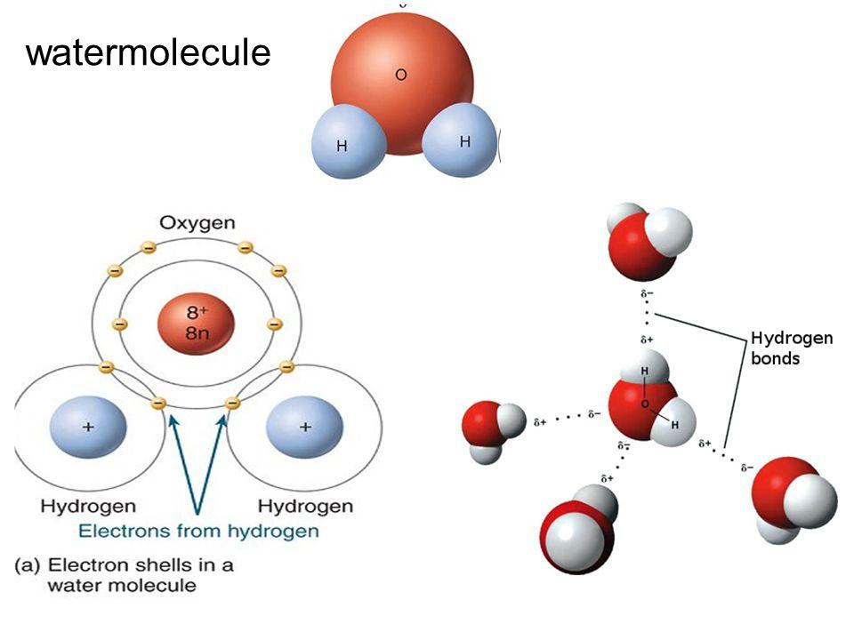 watermolecule