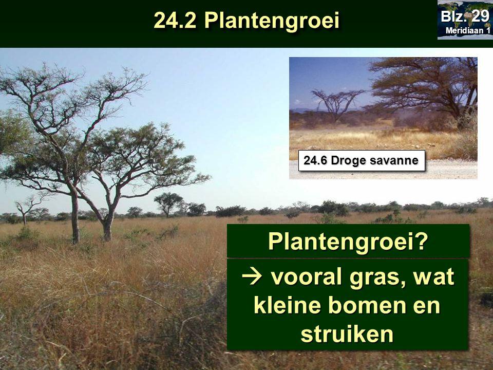 Plantengroei?Plantengroei?  vooral gras, wat kleine bomen en struiken 24.6 Droge savanne 24.2 Plantengroei Meridiaan 1 Meridiaan 1 Blz. 29