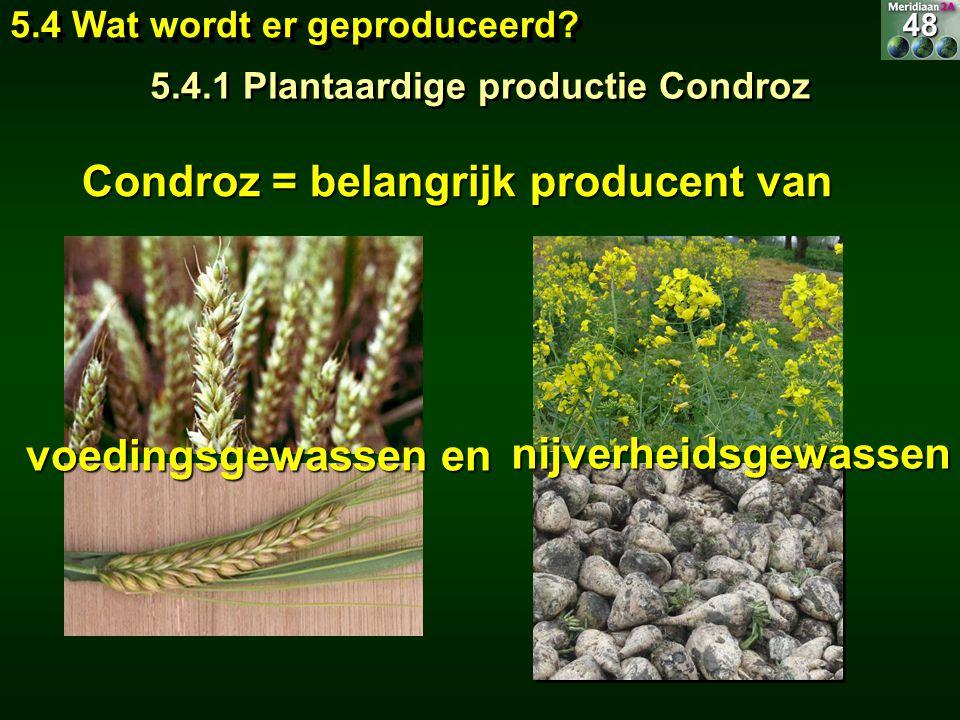 Condroz = belangrijk producent van voedingsgewassen en nijverheidsgewassen 5.4 Wat wordt er geproduceerd? 5.4.1 Plantaardige productie Condroz 48