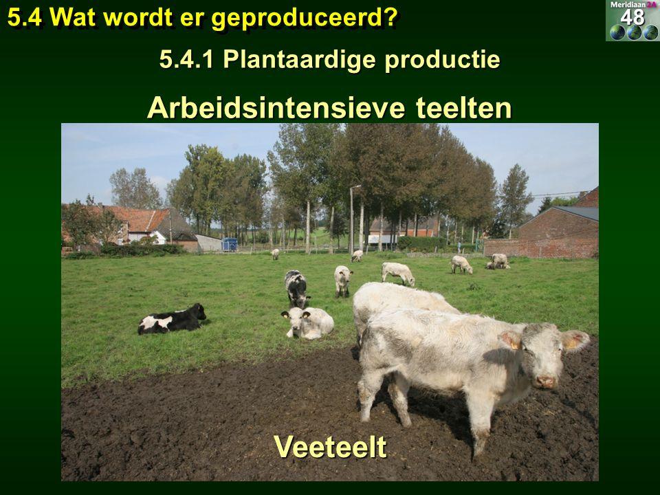 Arbeidsintensieve teelten suikerbiet vlas Vervangen door Veeteelt 5.4 Wat wordt er geproduceerd? 5.4.1 Plantaardige productie 48