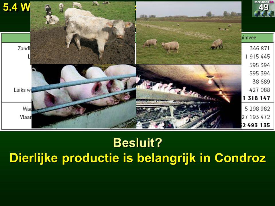 49 5.4 Wat wordt er geproduceerd? 5.4.2 Dierlijke productie 49Besluit? Dierlijke productie is belangrijk in Condroz