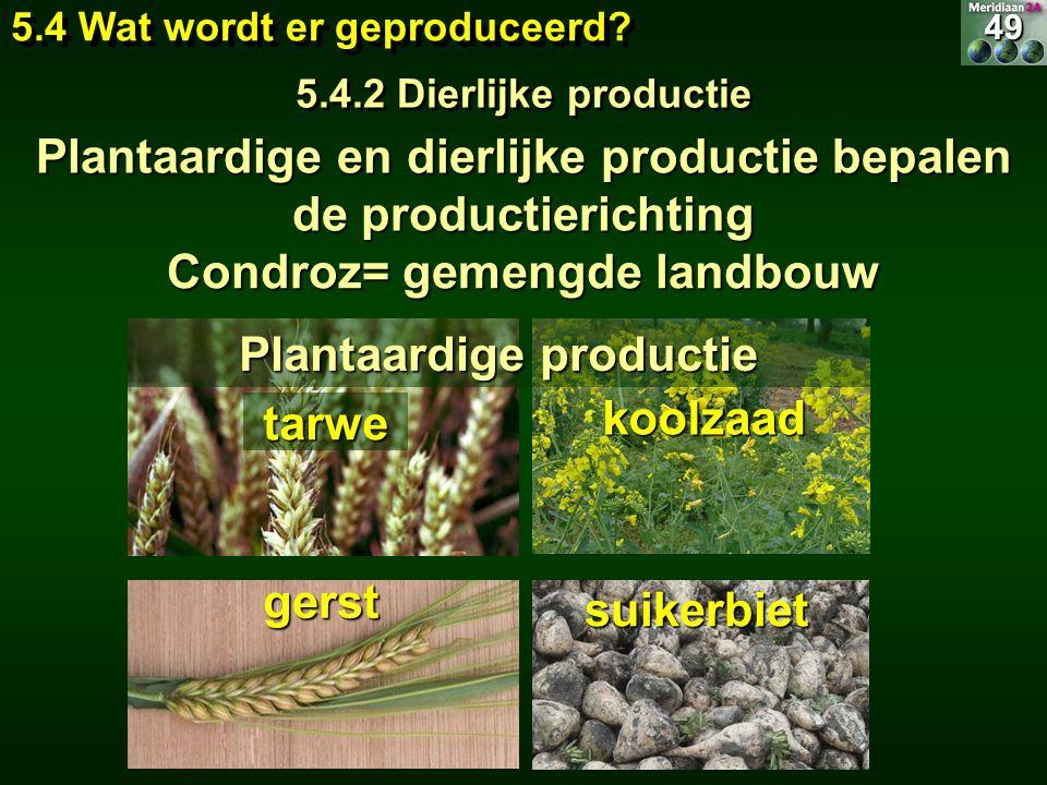 tarwe gerst suikerbiet koolzaad Plantaardige productie 49 5.4 Wat wordt er geproduceerd? 5.4.2 Dierlijke productie 49 Plantaardige en dierlijke produc