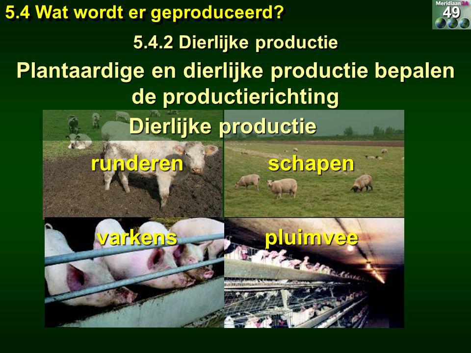 Plantaardige en dierlijke productie bepalen de productierichting runderen varkens schapen pluimvee Dierlijke productie 49 5.4 Wat wordt er geproduceer