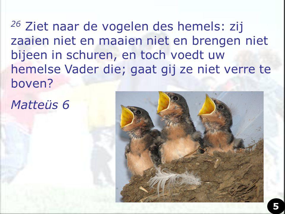 26 Ziet naar de vogelen des hemels: zij zaaien niet en maaien niet en brengen niet bijeen in schuren, en toch voedt uw hemelse Vader die; gaat gij ze