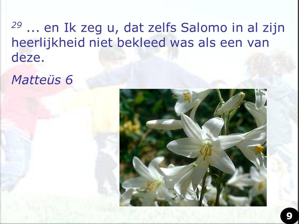 29... en Ik zeg u, dat zelfs Salomo in al zijn heerlijkheid niet bekleed was als een van deze. Matteüs 6 9