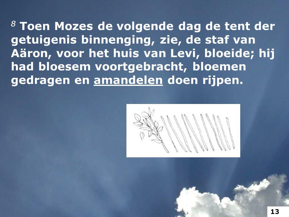 8 Toen Mozes de volgende dag de tent der getuigenis binnenging, zie, de staf van Aäron, voor het huis van Levi, bloeide; hij had bloesem voortgebracht