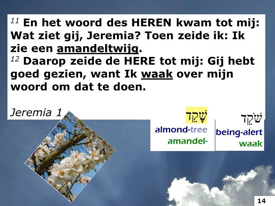 amandeltwijg 11 En het woord des HEREN kwam tot mij: Wat ziet gij, Jeremia? Toen zeide ik: Ik zie een amandeltwijg. waak 12 Daarop zeide de HERE tot m