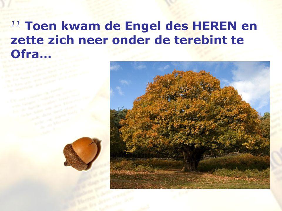 11 Toen kwam de Engel des HEREN en zette zich neer onder de terebint te Ofra…