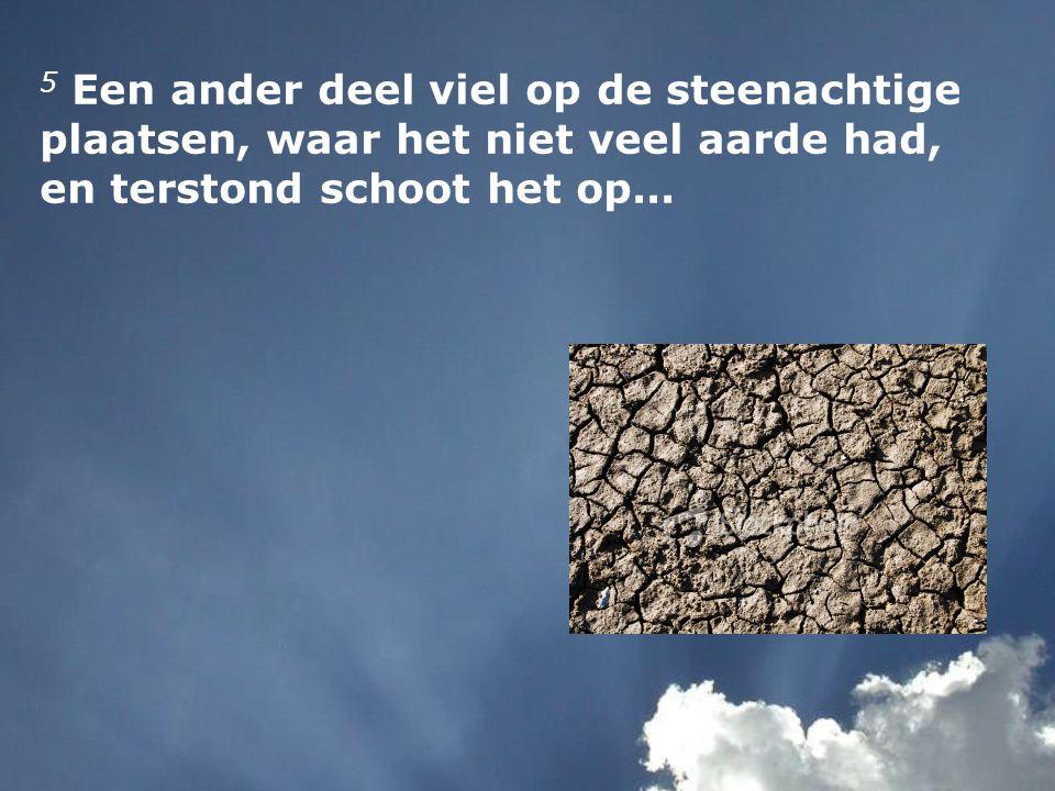 5 Een ander deel viel op de steenachtige plaatsen, waar het niet veel aarde had, en terstond schoot het op...