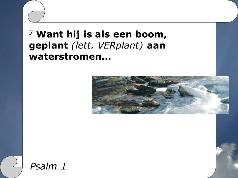 3 Want hij is als een boom, geplant (lett. VERplant) aan waterstromen... Psalm 1