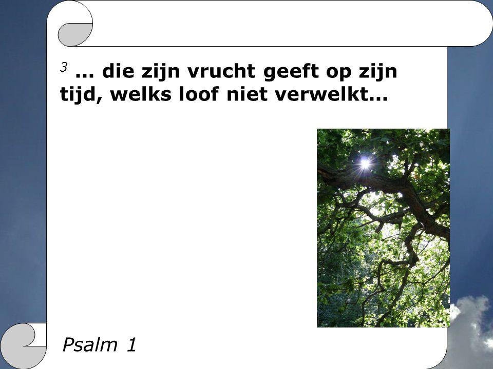 3... die zijn vrucht geeft op zijn tijd, welks loof niet verwelkt... Psalm 1