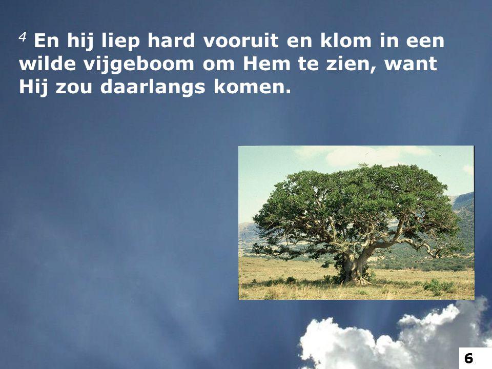 4 En hij liep hard vooruit en klom in een wilde vijgeboom om Hem te zien, want Hij zou daarlangs komen.
