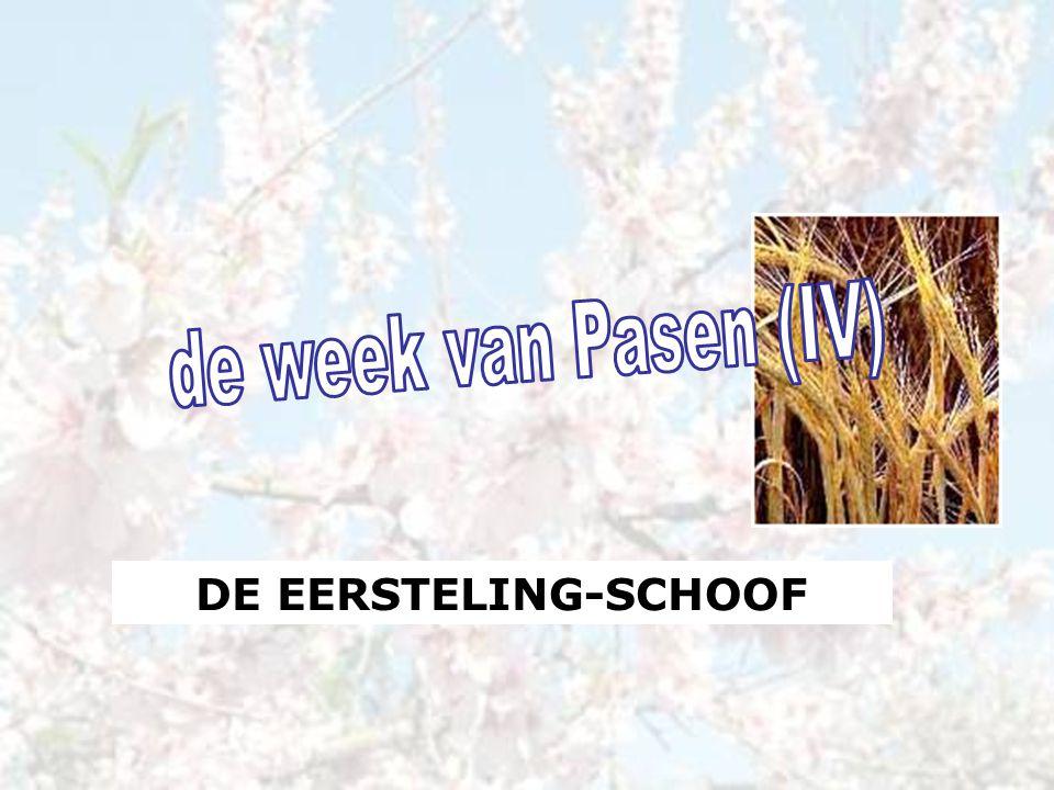 DE EERSTELING-SCHOOF