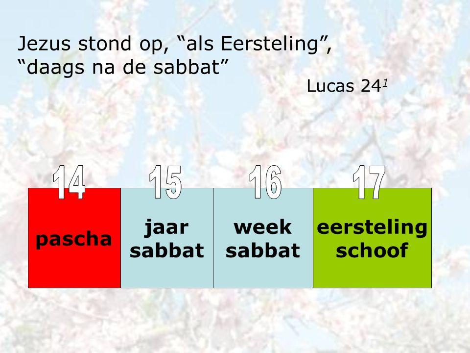 """jaar sabbat week sabbat eersteling schoof pascha Jezus stond op, """"als Eersteling"""", """"daags na de sabbat"""" Lucas 24 1"""
