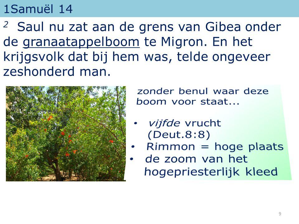 1Samuël 14 2 Saul nu zat aan de grens van Gibea onder de granaatappelboom te Migron.