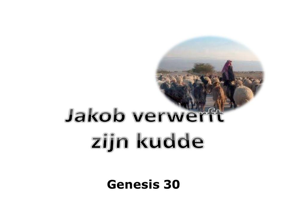 Genesis 30