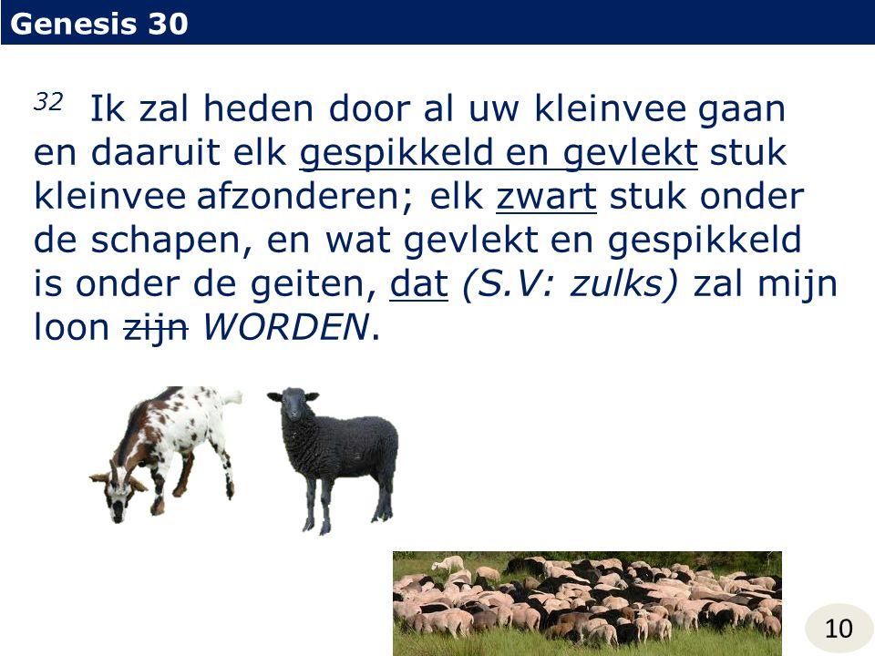 Genesis 30 10 32 Ik zal heden door al uw kleinvee gaan en daaruit elk gespikkeld en gevlekt stuk kleinvee afzonderen; elk zwart stuk onder de schapen, en wat gevlekt en gespikkeld is onder de geiten, dat (S.V: zulks) zal mijn loon zijn WORDEN.