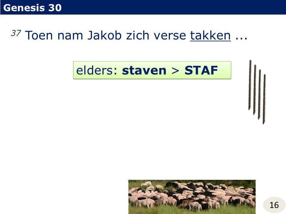 Genesis 30 16 37 Toen nam Jakob zich verse takken... elders: staven > STAF