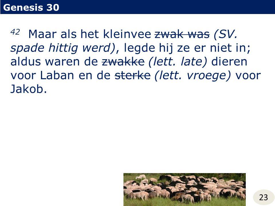 Genesis 30 23 42 Maar als het kleinvee zwak was (SV. spade hittig werd), legde hij ze er niet in; aldus waren de zwakke (lett. late) dieren voor Laban