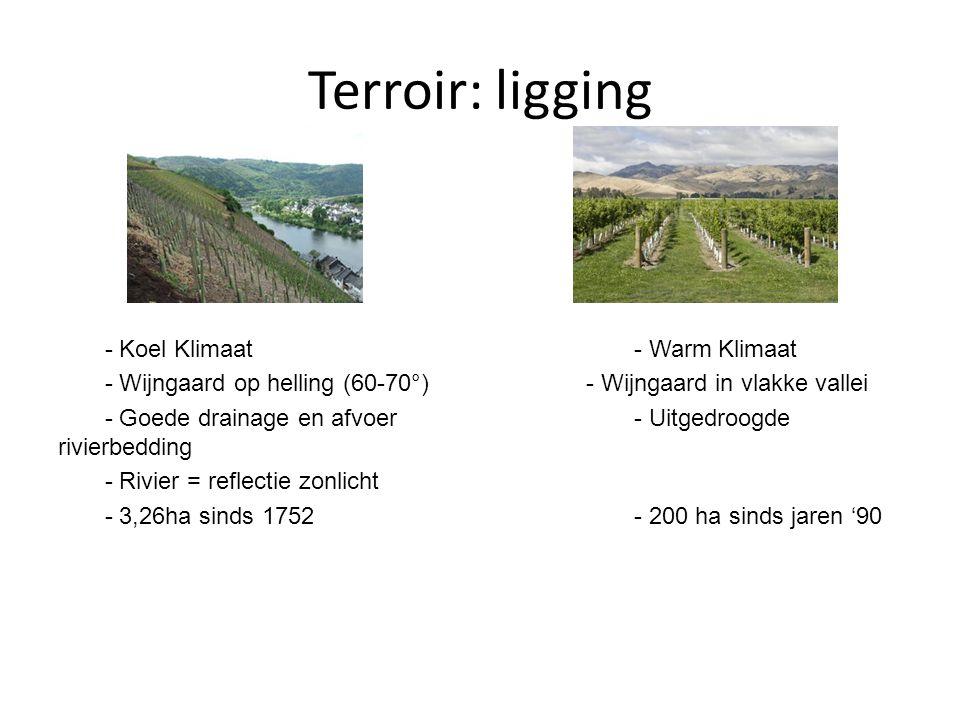 Terroir: ligging - Koel Klimaat- Warm Klimaat - Wijngaard op helling (60-70°)- Wijngaard in vlakke vallei - Goede drainage en afvoer- Uitgedroogde riv