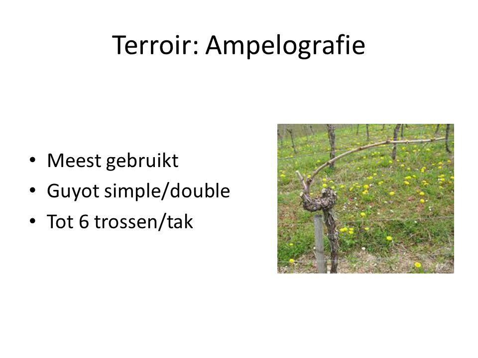Terroir: Ampelografie Meest gebruikt Guyot simple/double Tot 6 trossen/tak