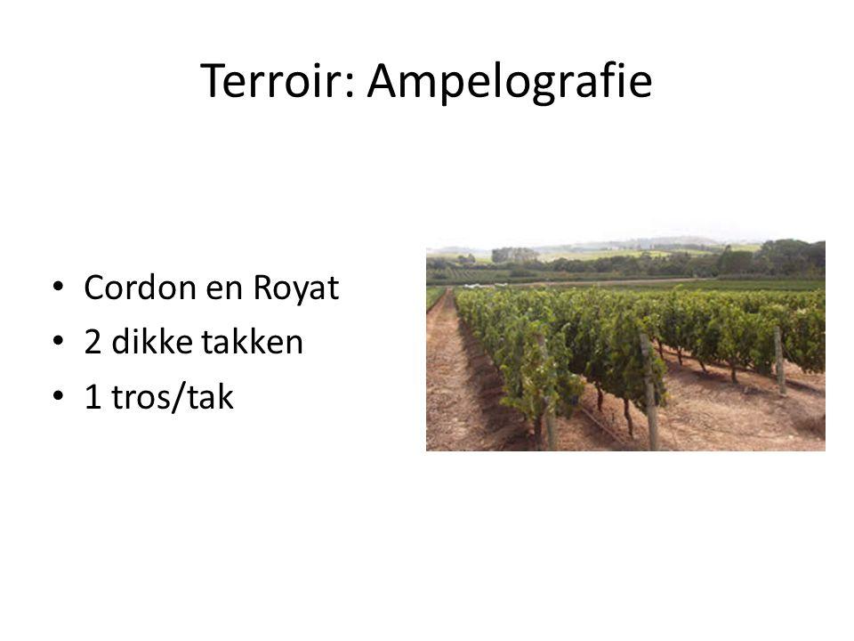 Terroir: Ampelografie Cordon en Royat 2 dikke takken 1 tros/tak