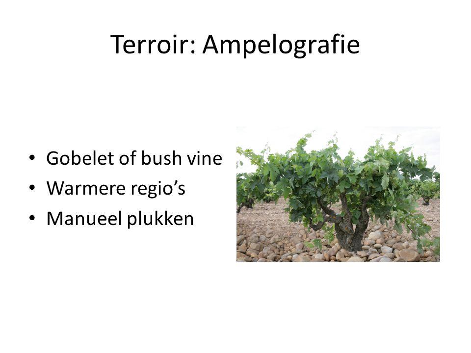 Terroir: Ampelografie Gobelet of bush vine Warmere regio's Manueel plukken