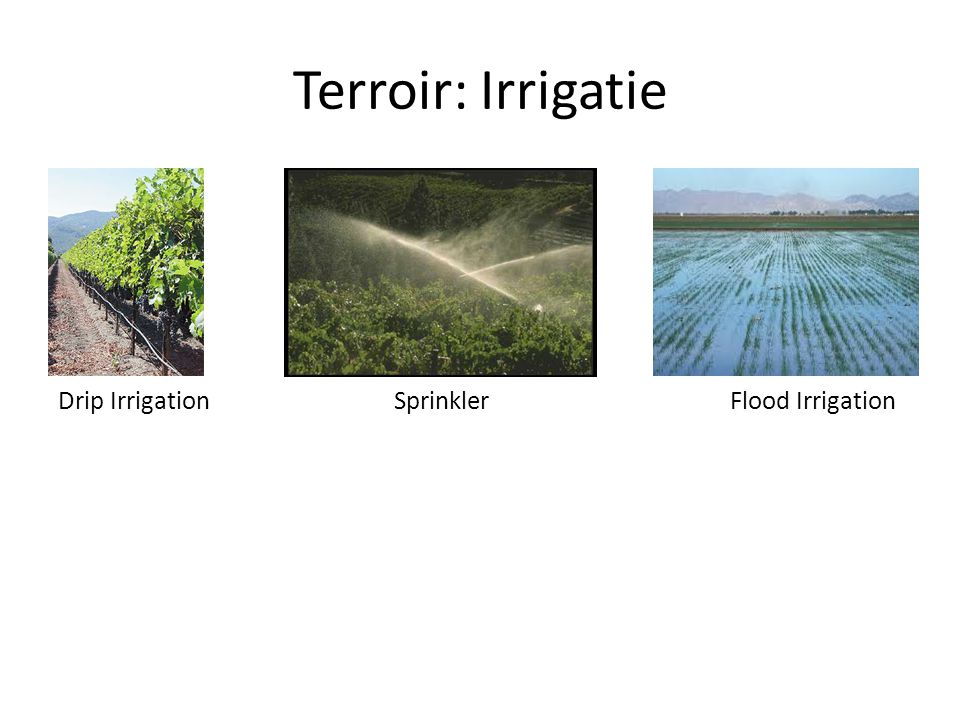Terroir: Irrigatie Drip IrrigationSprinklerFlood Irrigation