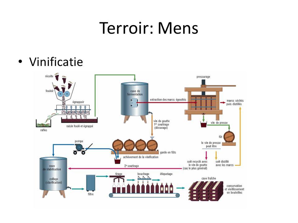 Terroir: Mens Vinificatie