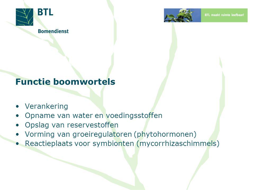 Functie boomwortels Verankering Opname van water en voedingsstoffen Opslag van reservestoffen Vorming van groeiregulatoren (phytohormonen) Reactieplaats voor symbionten (mycorrhizaschimmels)