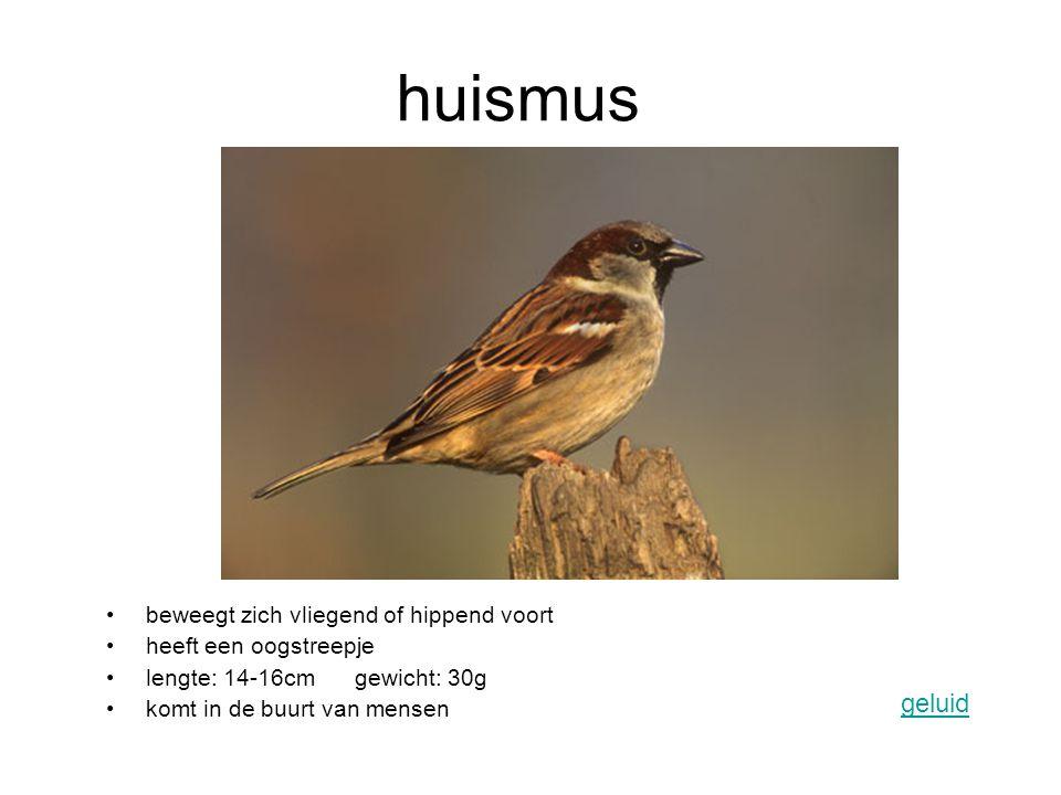 huismus beweegt zich vliegend of hippend voort heeft een oogstreepje lengte: 14-16cm gewicht: 30g komt in de buurt van mensen geluid