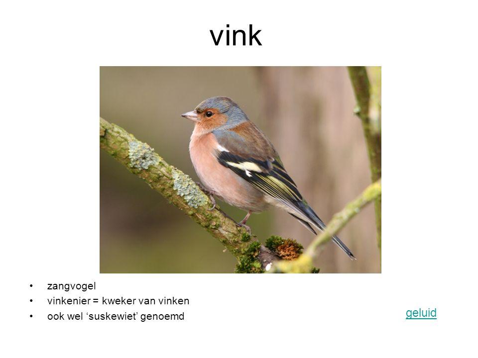 vink zangvogel vinkenier = kweker van vinken ook wel 'suskewiet' genoemd geluid