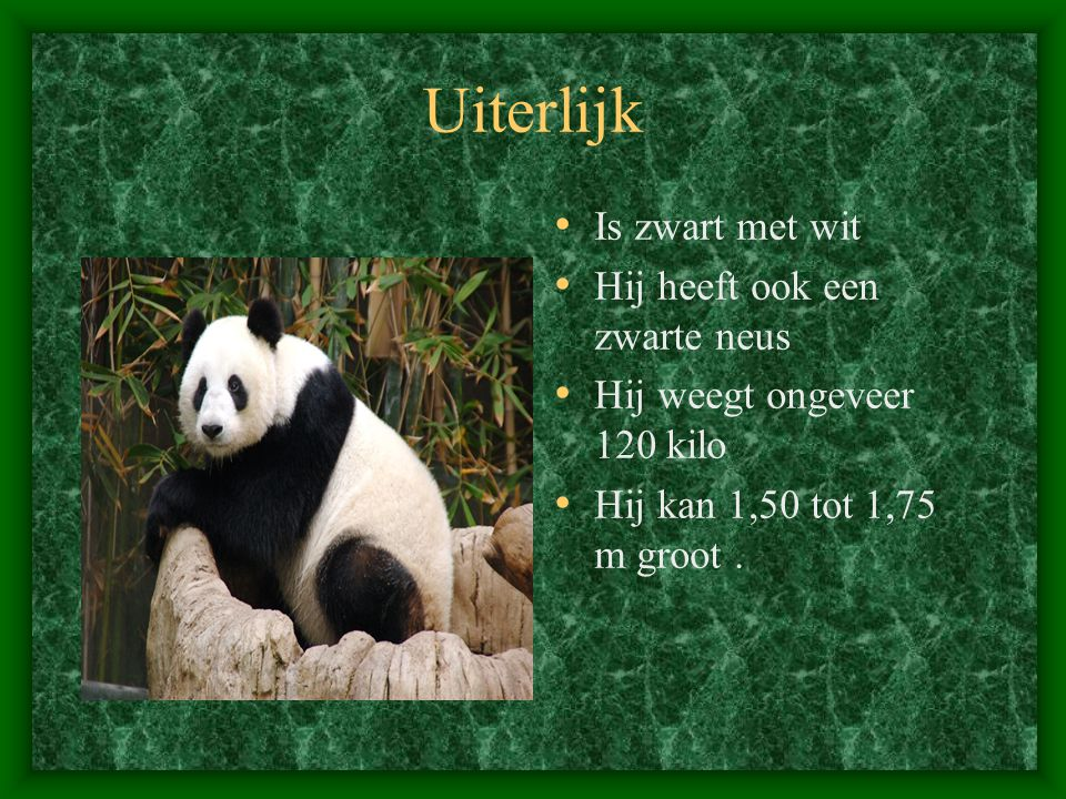Uiterlijk Is zwart met wit Hij heeft ook een zwarte neus Hij weegt ongeveer 120 kilo Hij kan 1,50 tot 1,75 m groot.