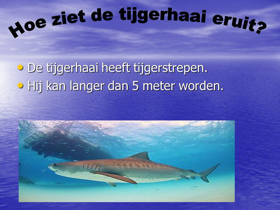 De tijgerhaai heeft tijgerstrepen. De tijgerhaai heeft tijgerstrepen. Hij kan langer dan 5 meter worden. Hij kan langer dan 5 meter worden.