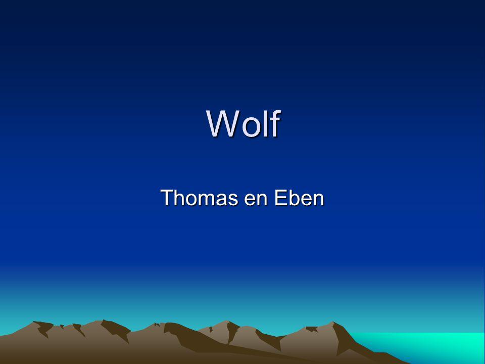 Wolf Thomas en Eben