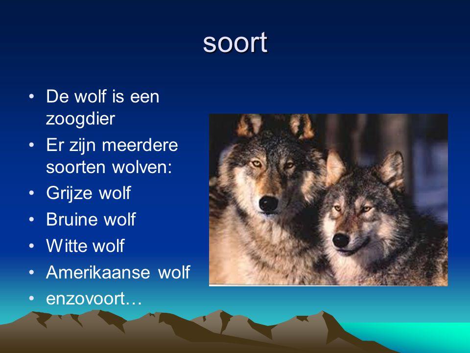 soort De wolf is een zoogdier Er zijn meerdere soorten wolven: Grijze wolf Bruine wolf Witte wolf Amerikaanse wolf enzovoort…