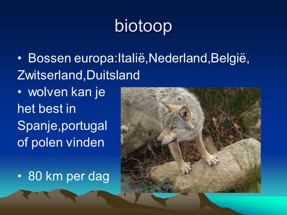 biotoop Bossen europa:Italië,Nederland,België, Zwitserland,Duitsland wolven kan je het best in Spanje,portugal of polen vinden 80 km per dag