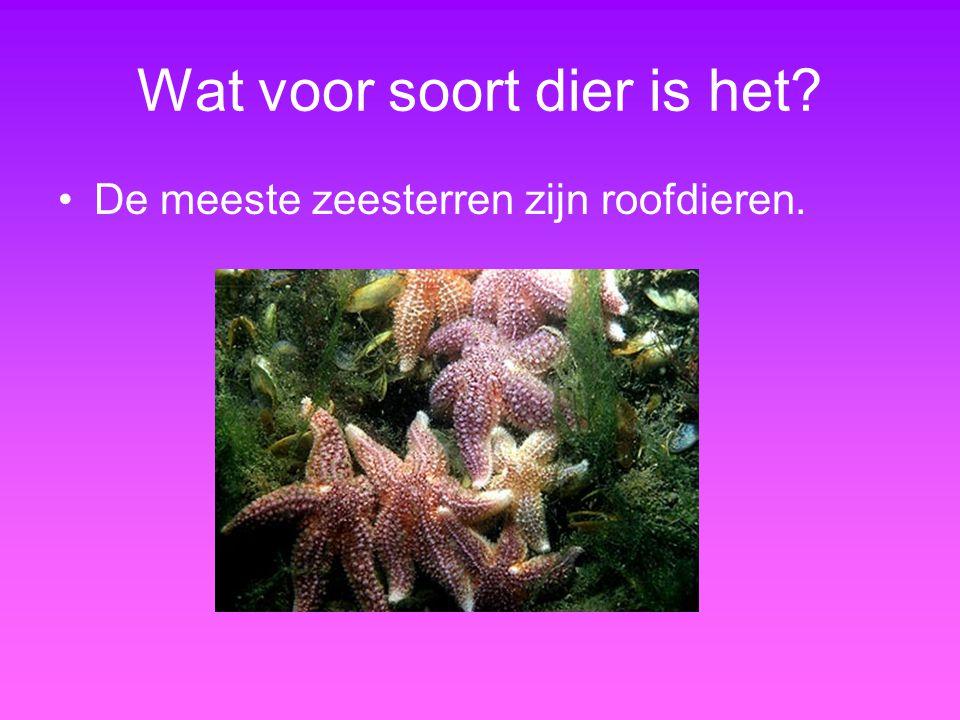 Wat voor soort dier is het? De meeste zeesterren zijn roofdieren.