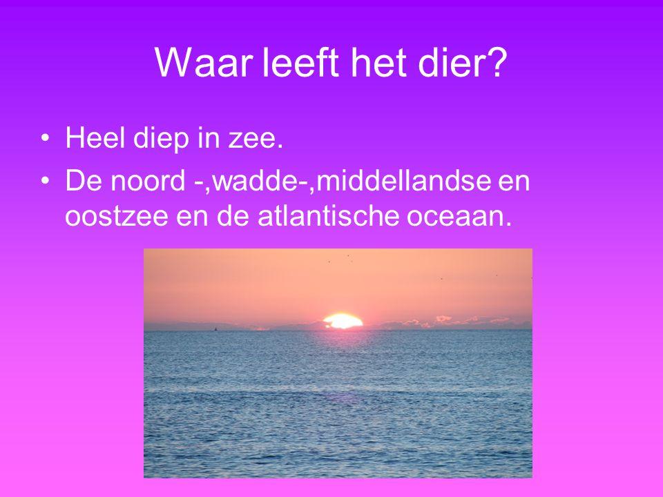 Waar leeft het dier? Heel diep in zee. De noord -,wadde-,middellandse en oostzee en de atlantische oceaan.