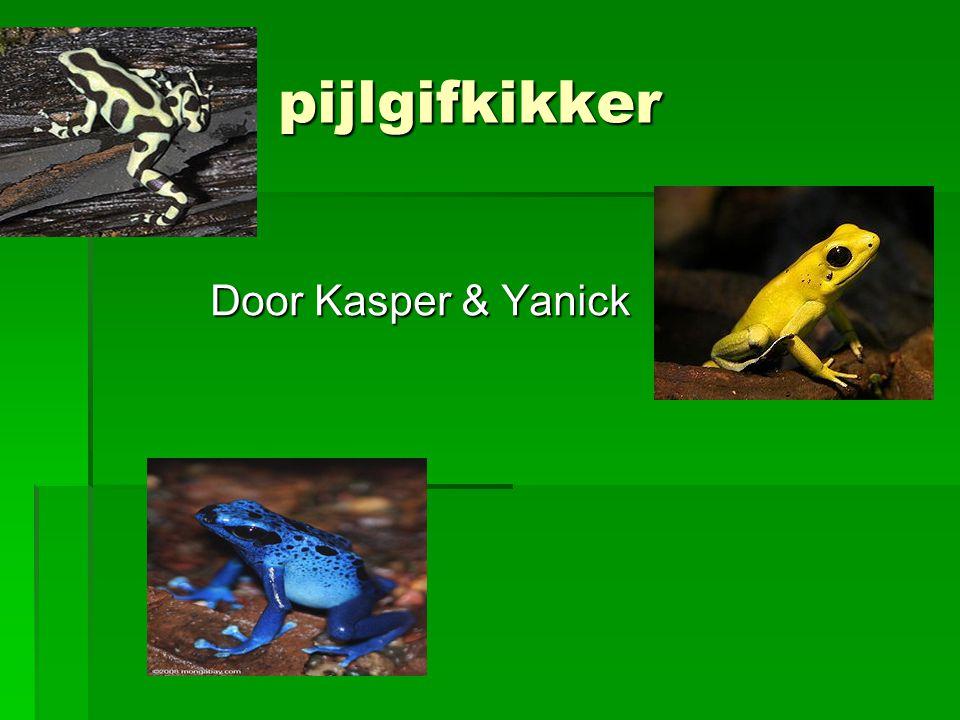 pijlgifkikker Door Kasper & Yanick