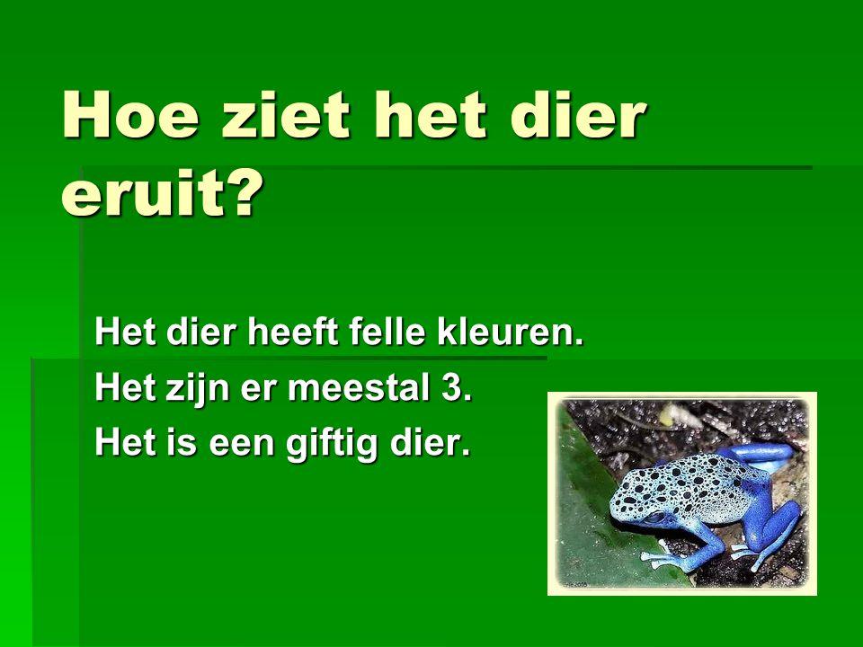 Waar leeft het dier  De pijlgifkikker is een typische bewoner van regenwouden die het hele leven op een enkele plaats kan verblijven.