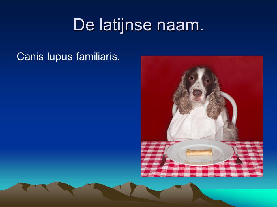 De latijnse naam. Canis lupus familiaris.