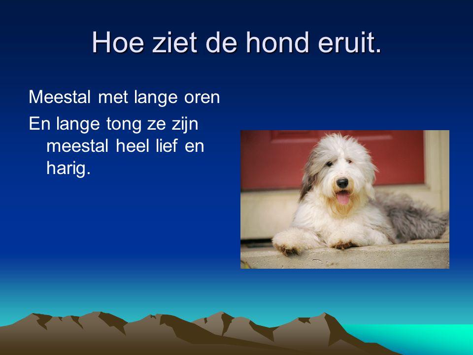 Hoe ziet de hond eruit. Meestal met lange oren En lange tong ze zijn meestal heel lief en harig.