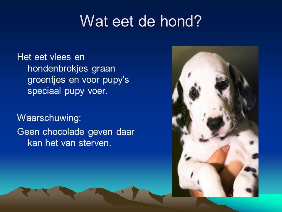 Wat eet de hond? Het eet vlees en hondenbrokjes graan groentjes en voor pupy's speciaal pupy voer. Waarschuwing: Geen chocolade geven daar kan het van