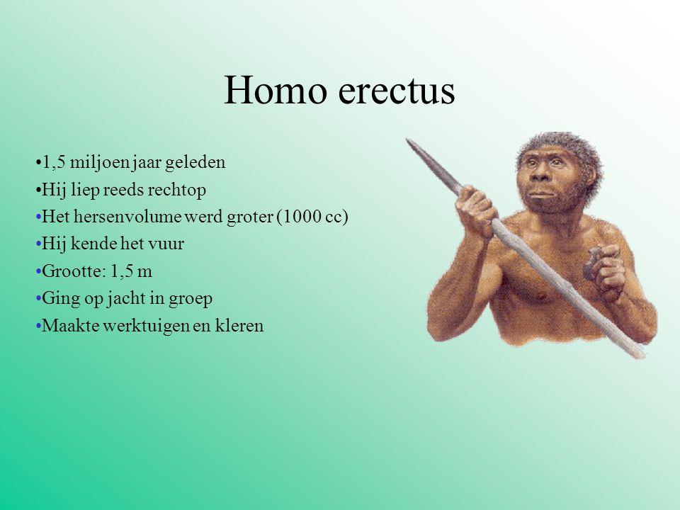Homo erectus 1,5 miljoen jaar geleden Hij liep reeds rechtop Het hersenvolume werd groter (1000 cc) Hij kende het vuur Grootte: 1,5 m Ging op jacht in