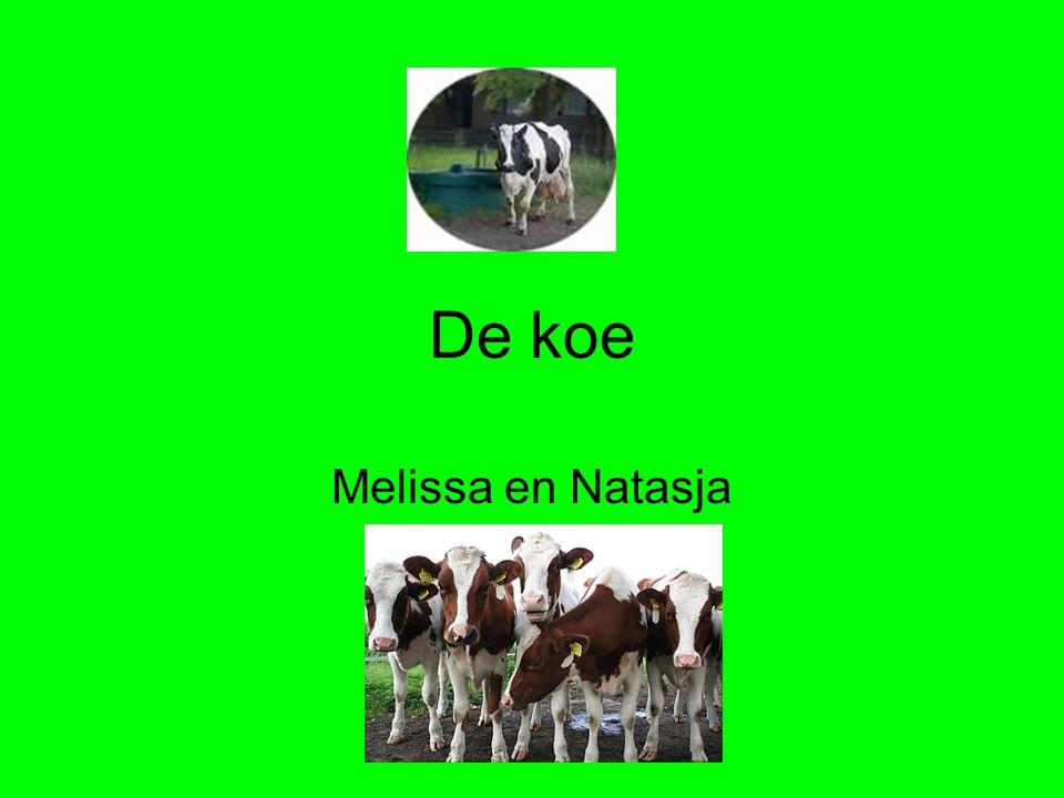 De koe Melissa en Natasja